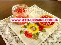 Насіння кукурудзи АУРУМ ФАО 320
