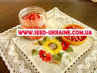 Насіння кукурудзи ДН АНШЛАГ ФАО 420